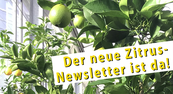 Zitrus-Newsletter